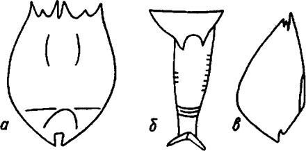 ris-c.83